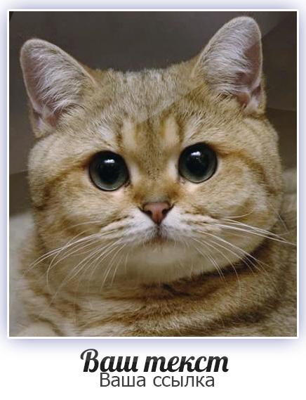 psd аватарки для контакта:
